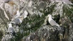 Seagull perched on a rock  at Kachemak Bay, Alaska
