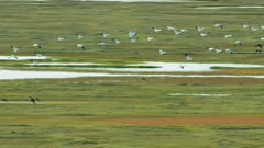 Waterfowl birds, possibly Snow Geese, migrating over the North Slope in the fall