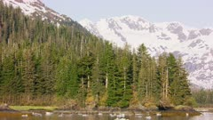 UHD stabilized traveling shot of forest and mountains in Prince William Sound Alaska