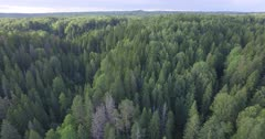 Scenic. Drone aerial footage over forest canopy.