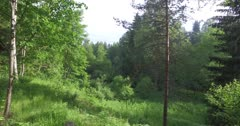 Scenic. Drone aerial footage over dense forest canopy.