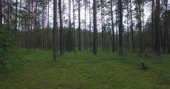 Scenic. Drone aerial footage through dense forest tree trunks and foliage.
