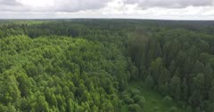 Scenic. Drone aerials over vast forest and surrounding vegetation. Overcast.