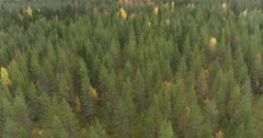 Scenic. Drone aerial footage over dense forest tree canopy.