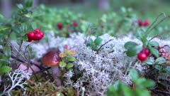 Scenic. Wild forest flowers and fungi.