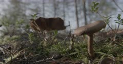 Scenic. Mushroom emerging from forest ground.