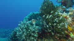 Central Tropical Pacific Coral Reef