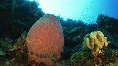 tubular Sponge shot towards surface
