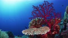 beautiful Sun Rays bathe coral Scene
