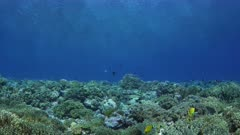 Wide angle shot of coral reef
