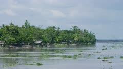 invasive plant flows down river passed native village