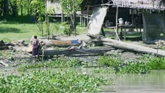 Lady uses River water to produce Sago , Palm starch , it is the main starch source for people in the river