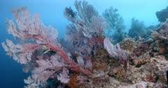 Colourful Sea Fans