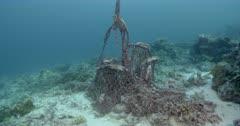 Ghost Fishing Gear, Great Barrier Reef