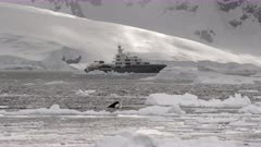 Orca Killer Whale Spyhopping in front of Superyacht in the Antarctic