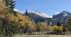 Rocky Mountain view with yellow aspens 4K