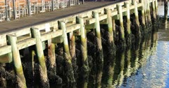 View of wooden wharf pilings with reflections 4K