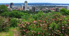 View of Hamilton, Canada, city center with flowers in foreground 4K