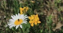 Bee on flower gathering pollen 4K