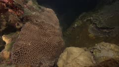 Flower Garden Banks Spawning Coral