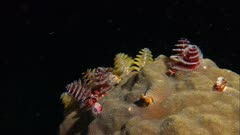 Flower Garden Banks Christmas Tree Worms