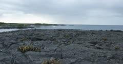 Galapagos Volcanic island cactus jib up 3