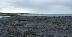 Galapagos Volcanic island cactus jib up 4