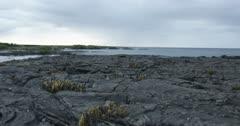 Galapagos Volcanic island cactus jib up 5