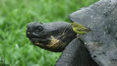Galapagos Giant Turtle and Finch