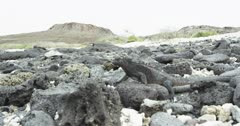 Galapagos Marine Iguana handheld slowmo
