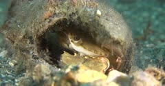 A crab on a shallow reef