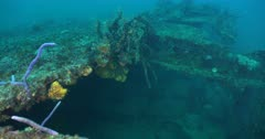 Caribbean Ship Wrecks Provide Diverse Habitat for Marine Animals