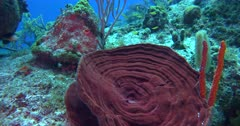 Coral heads abound with small tropical fish and tropical color in this tripod stabilized shot