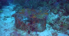 Underwater Marine Debris, such as traps and lines, are growing issues for many Caribbean nations