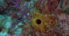 Tube Sponges can be found in the Deep Sea or on Shallow Reefs