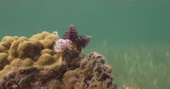 Christmas Tree Worms living on a small live rock reef