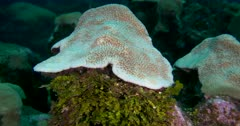 Coral detail and tiny reef fish