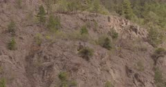 4K Mountain Goats two lying down on step rock face, wide shot - SLOG2