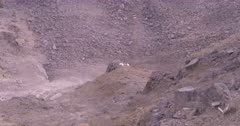 4K Mountain Goats three perched on stone edge up in alpine, wider version - SLOG2 Not Colour Corrected
