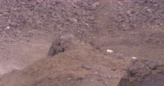 4K Mountain Goats three walking down from stone edge up in alpine, extreme long lens - SLOG2 Not Colour Corrected