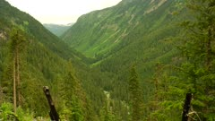 Thick forest in Purcell Mountains, looking out across long valley