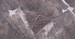 4K Raven nest on rocky ledge, wind blowing snow, Zoom out - SLOG2