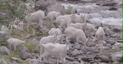 Mountain Goats - large band with kids on rivers shore, Slow Motion, Zoom out
