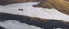 Two Grizzly cubs (Brown Bear) playing in the snow, rolling around. Mother lying in lower right frame - Slow Motion