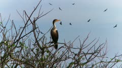 Zoom out to tree full of cormorants