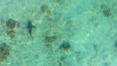aerial view of a Bull Shark (Carcharhinus leucas). reefs of the Sea of Cortez, Pacific ocean. Cabo Pulmo, Baja California Sur, Mexico. The world's aquarium.