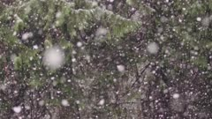 Snowfall in forest - slow motion