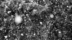 Snowfall in forest - slow motion, Black & White