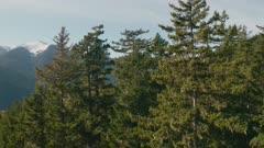 aerial pan, Greywolf River valley, Olympic Peninsula