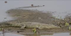 crocodile pan from crocodile to jacana